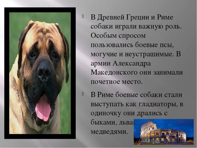 В Древней Греции и Риме собаки играли важную роль. Особым спросом пользовалис...