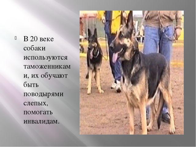 В 20 веке собаки используются таможенниками, их обучают быть поводырями слепы...