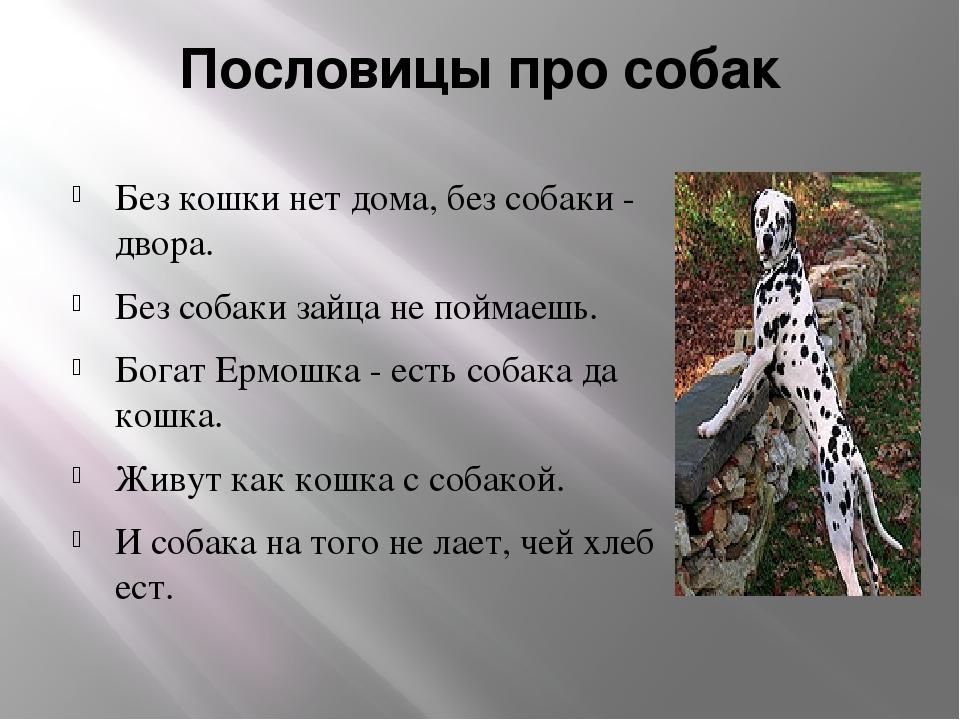 Пословицы про собак Без кошки нет дома, без собаки - двора. Без собаки зайца...