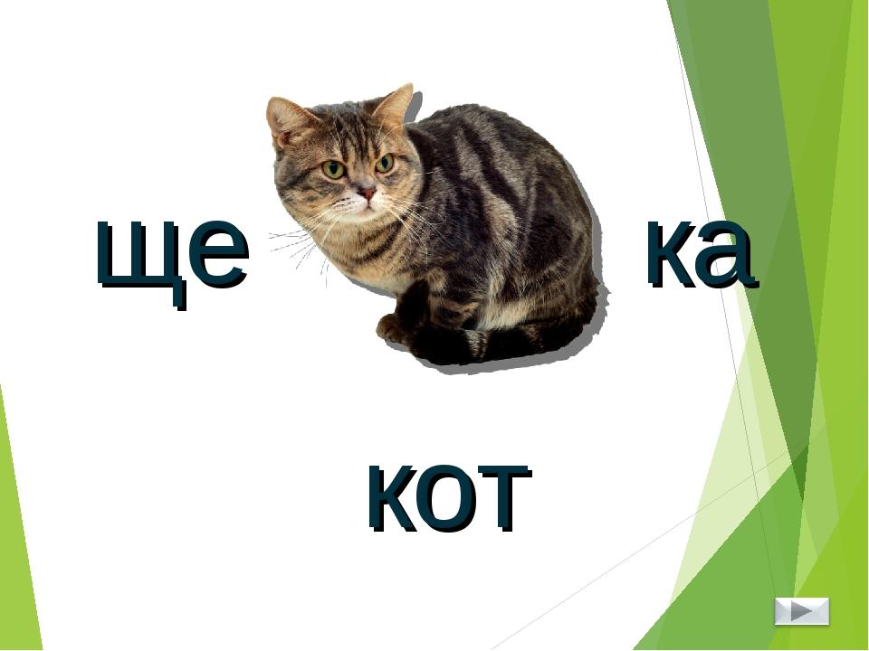 ребусы с картинкой кота мыльницах