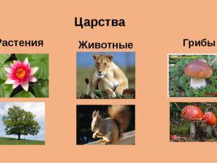 Царства Растения Животные Грибы