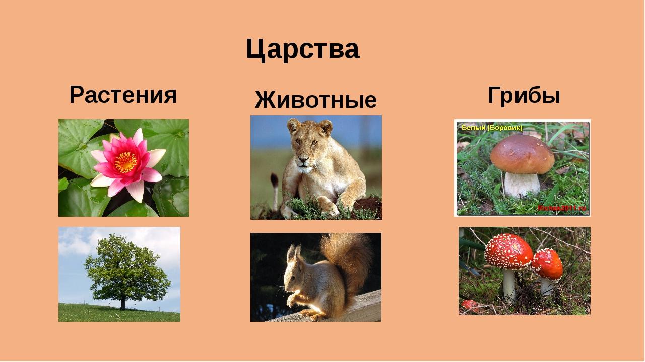 92 статья царство животных, знать отличия животных от растений и грибов,по плану дать характеристику одноклеточных