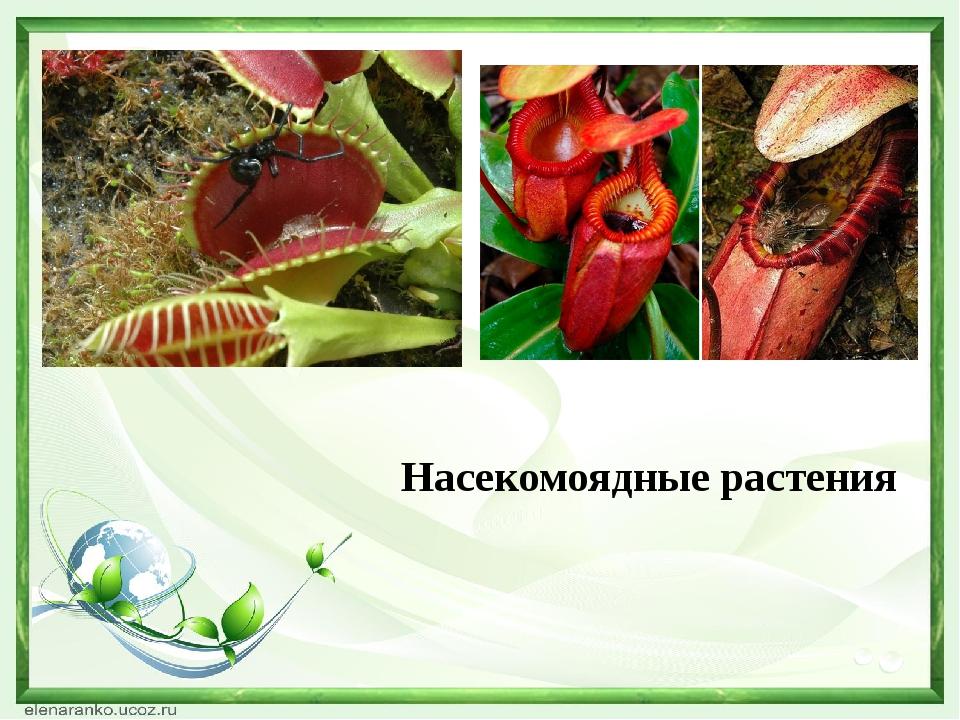 Насекомоядные растения