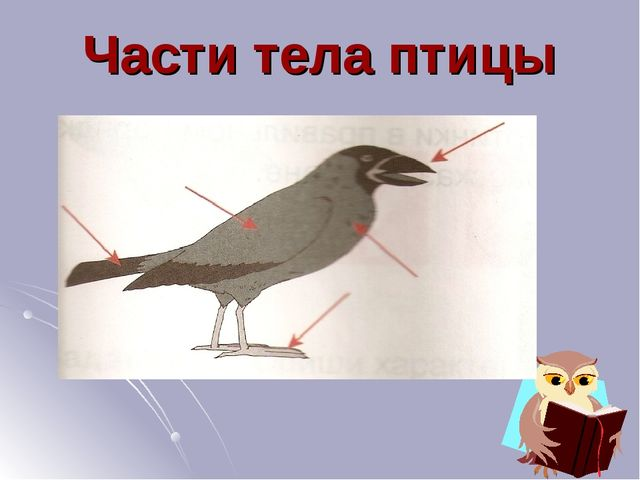 Части тела птицы