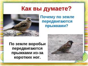Как вы думаете? Почему по земле передвигаются прыжками? по земле передвигаютс