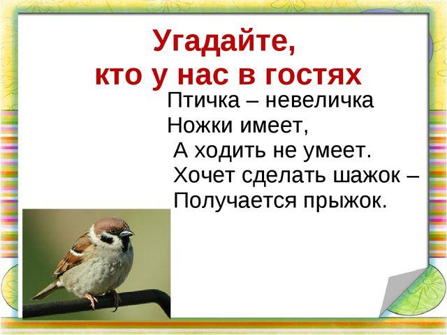 Угадайте, кто у нас в гостях Птичка – невеличка Ножки имеет, А ходить не уме...