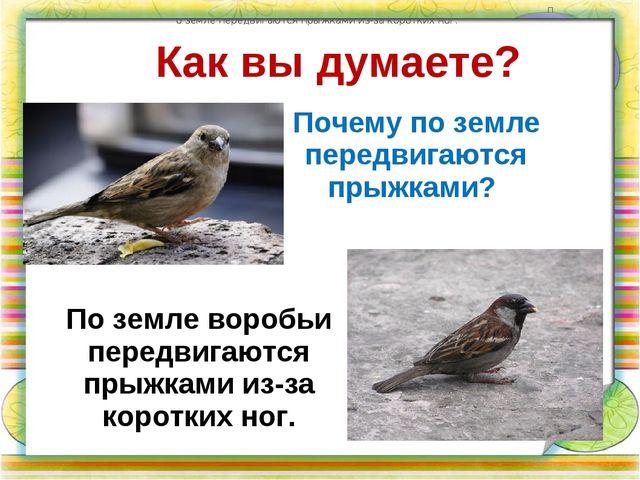Как вы думаете? Почему по земле передвигаются прыжками? по земле передвигаютс...