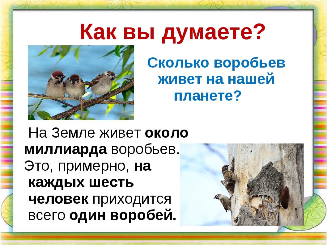 На Земле живет около миллиарда воробьев. Это, примерно, на каждых шесть чело...