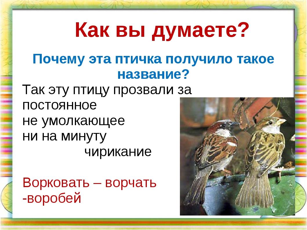 Так эту птицу прозвали за постоянное не умолкающее ни на минуту чирикание Вор...