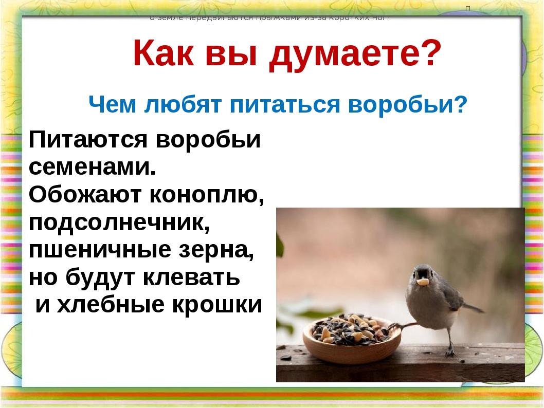 Как вы думаете? Чем любят питаться воробьи? по земле передвигаются прыжками и...
