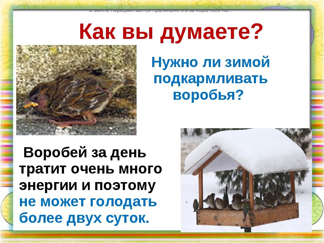 Как вы думаете? Нужно ли зимой подкармливать воробья? по земле передвигаются...
