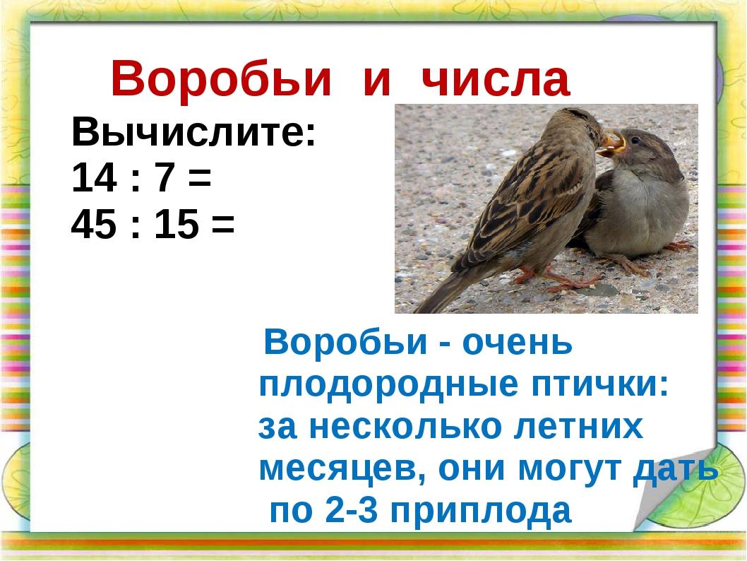 Воробьи и числа Воробьи - очень плодородные птички: за несколько летних месяц...