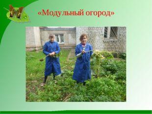 «Модульный огород»