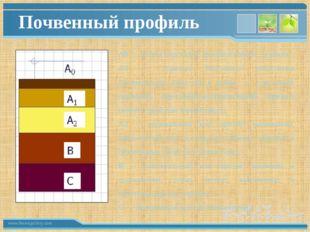 Почвенный профиль А0 — лесная подстилка, травяной войлок, дернина; А1 — гориз