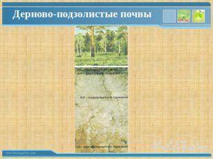 Дерново-подзолистые почвы www.themegallery.com
