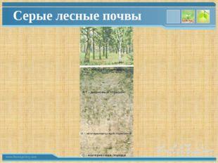 Серые лесные почвы www.themegallery.com