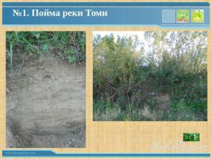 №1. Пойма реки Томи www.themegallery.com