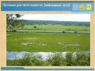 Луговая растительность (пойменные луга) www.themegallery.com