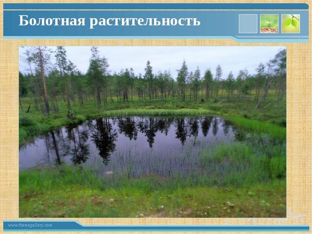 Болотная растительность www.themegallery.com