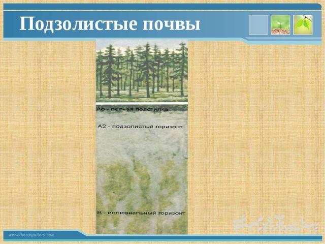 Подзолистые почвы www.themegallery.com