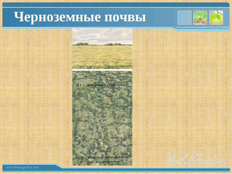 Черноземные почвы www.themegallery.com