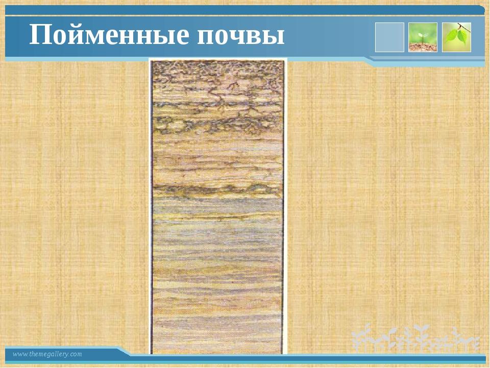 Пойменные почвы www.themegallery.com