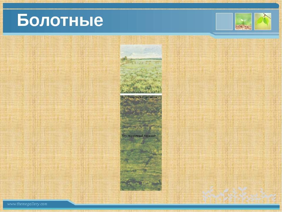 Болотные www.themegallery.com