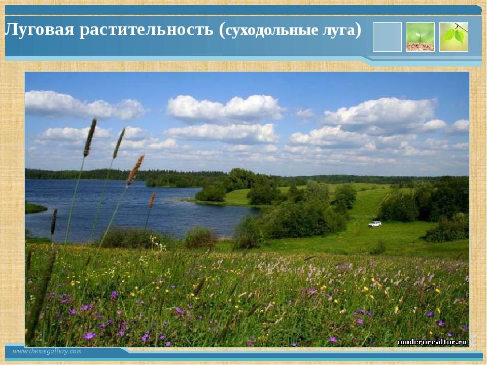 Луговая растительность (суходольные луга) www.themegallery.com