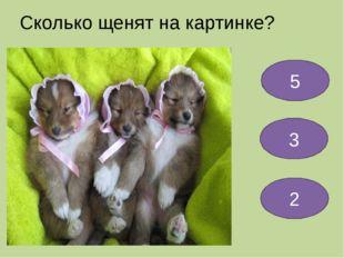 Сколько щенят на картинке? 5 3 2