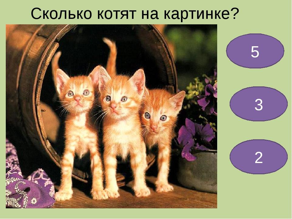 Сколько котят на картинке? 5 3 2