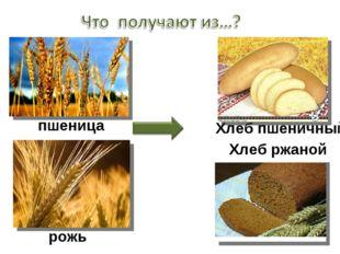 пшеница Хлеб пшеничный рожь Хлеб ржаной