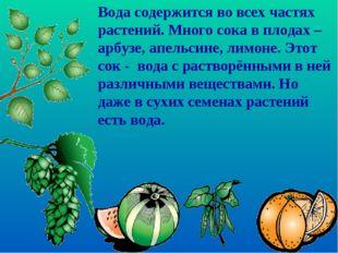 Вода содержится во всех частях растений. Много сока в плодах – арбузе, апельс