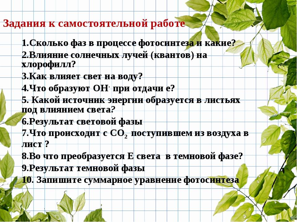1.Сколько фаз в процессе фотосинтеза и какие? 2.Влияние солнечных лучей (кван...