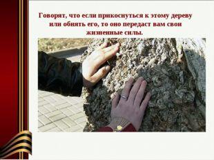 Говорят, что если прикоснуться к этому дереву или обнять его, то оно передаст