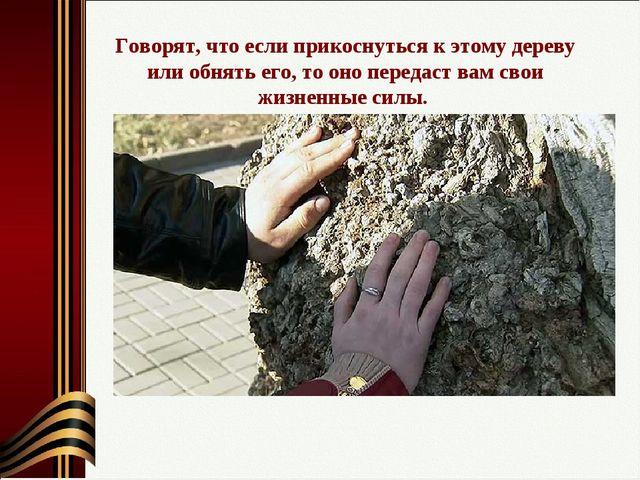 Говорят, что если прикоснуться к этому дереву или обнять его, то оно передаст...