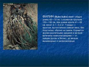 ФИЛИН (Bubo bubo) имеет общую длину 62—72 см, с размахом крыльев 150—180 см,