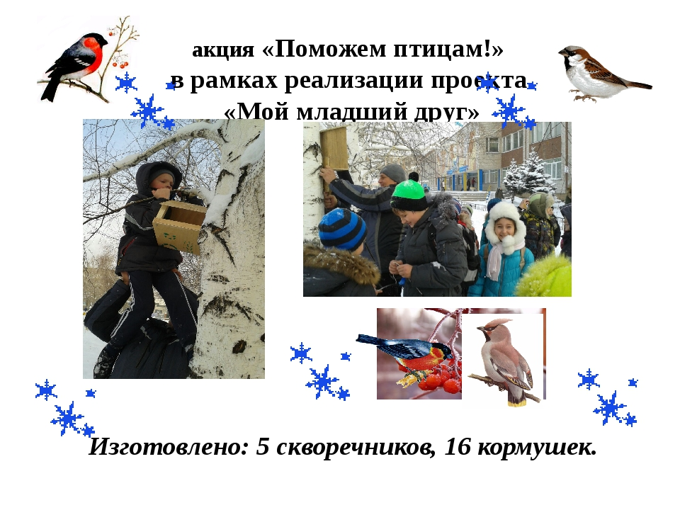 акция «Поможем птицам!» в рамках реализации проекта «Мой младший друг» Изгото...