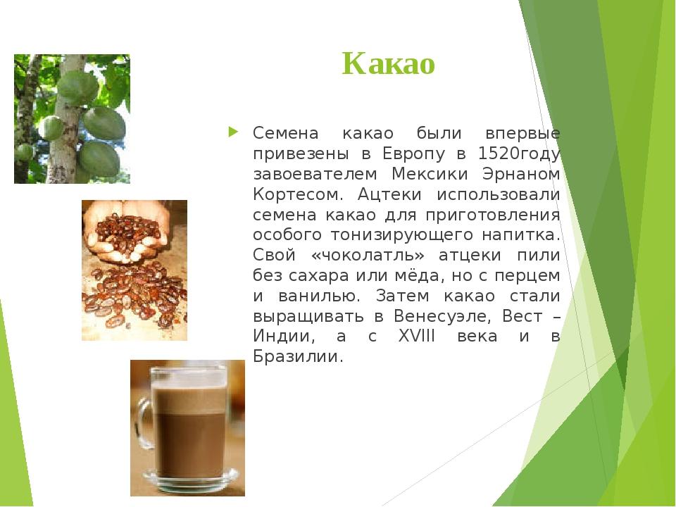 Какао Семена какао были впервые привезены в Европу в 1520году завоевателем Ме...
