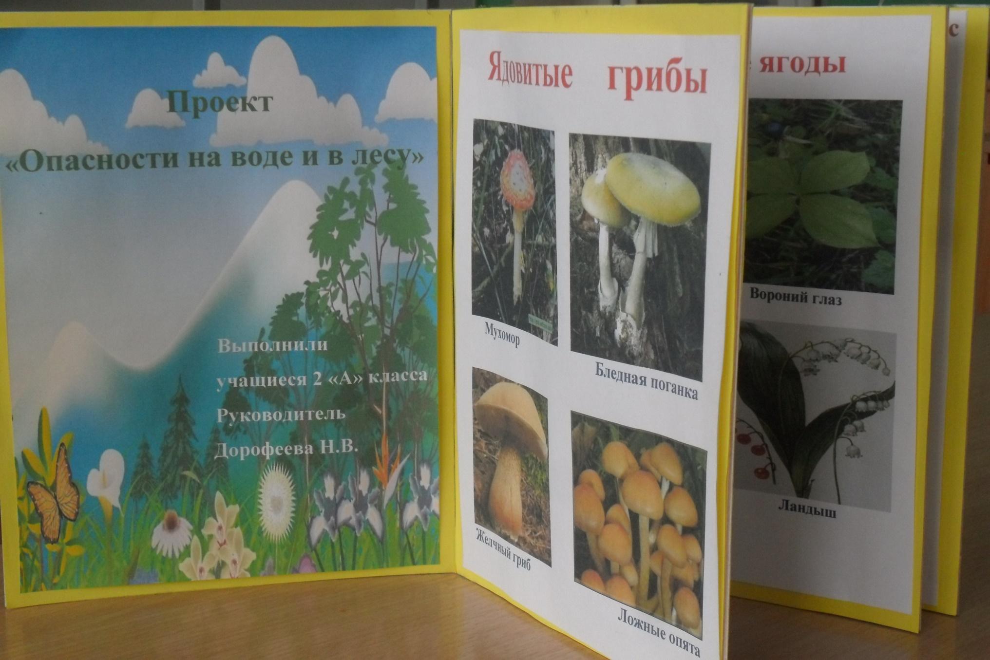Картинки на воде и в лесу окружающий мир