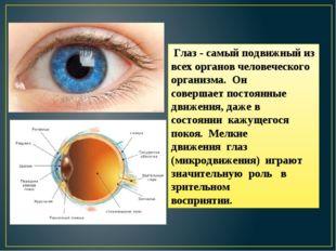 Глаз - самый подвижный из всех органов человеческого организма. Он совершает