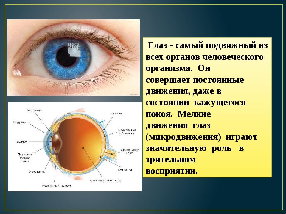 Глаз - самый подвижный из всех органов человеческого организма. Он совершает...