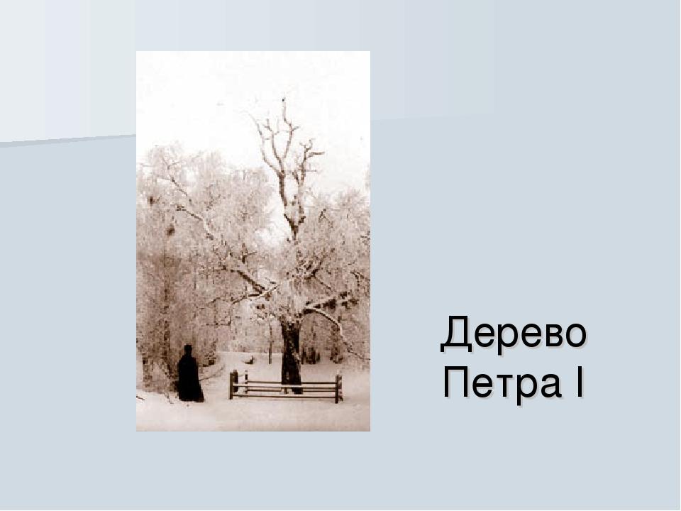 Дерево Петра I