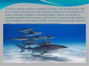 В морях и океанах плавают, собираясь в большие стаи, миллионы рыб. Они могут