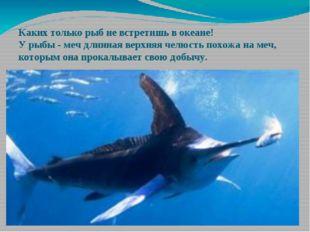 Каких только рыб не встретишь в океане! У рыбы - меч длинная верхняя челюсть
