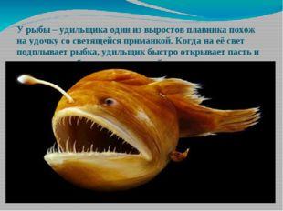 У рыбы – удильщика один из выростов плавника похож на удочку со светящейся пр