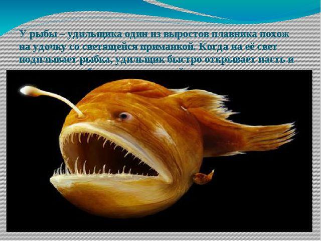 У рыбы – удильщика один из выростов плавника похож на удочку со светящейся пр...