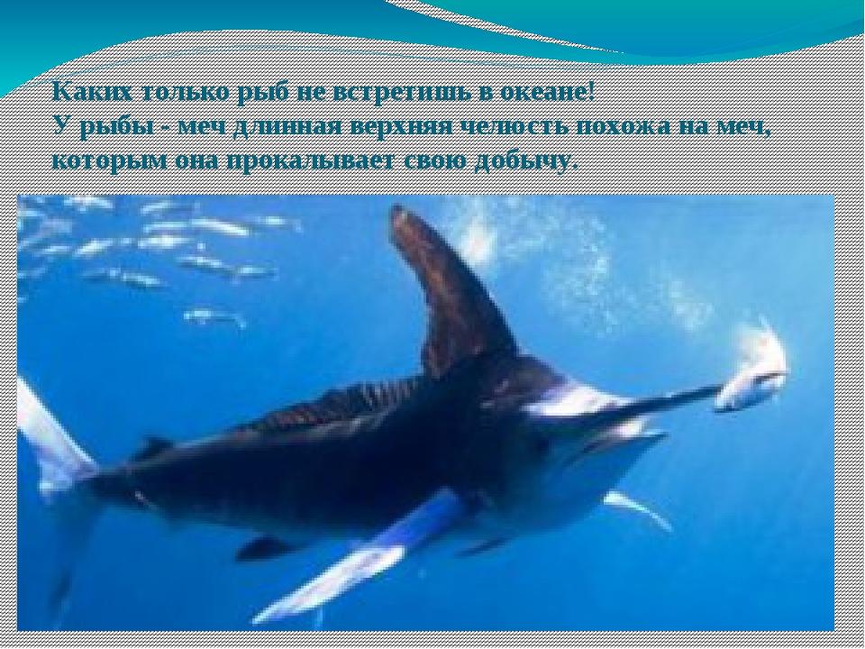 Каких только рыб не встретишь в океане! У рыбы - меч длинная верхняя челюсть...