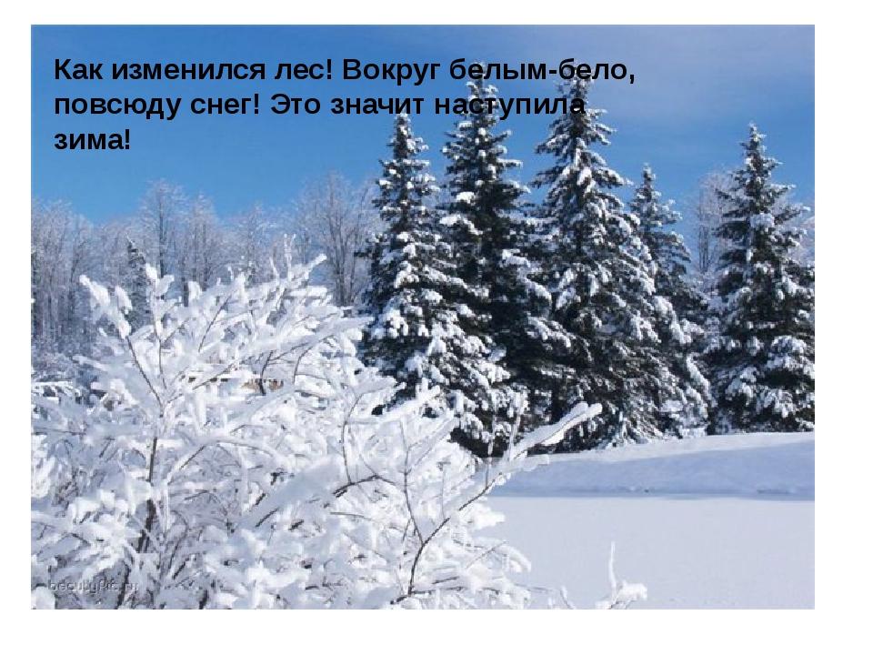 Как изменился лес! Вокруг белым-бело, повсюду снег! Это значит наступила зима!