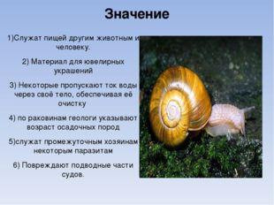 Значение 1)Служат пищей другим животным и человеку. 2) Материал для ювелирных
