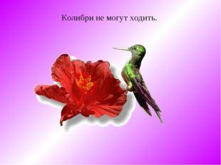 Колибри не могут ходить.